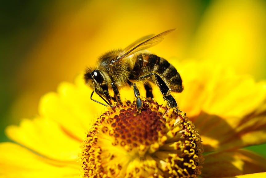 Bee Friendly Gardening