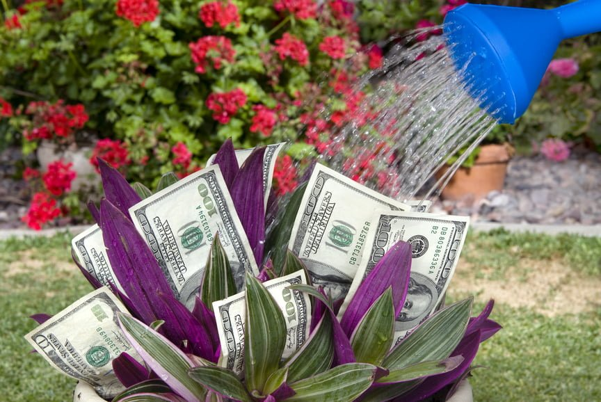 Budget Friendly Gardening