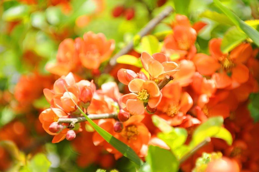 The Best Flowering Shrubs For Northern Utah Millcreek Gardens
