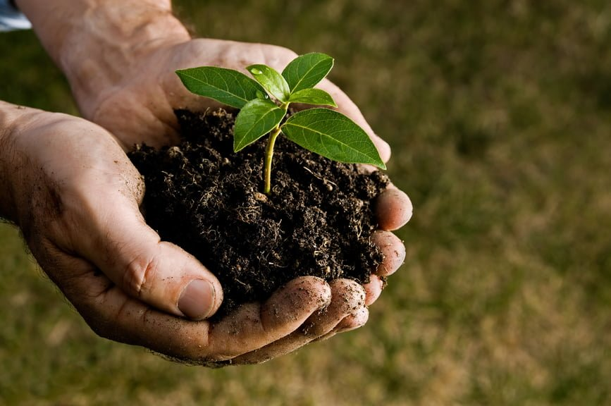 Avoid Soil Borne Diseases