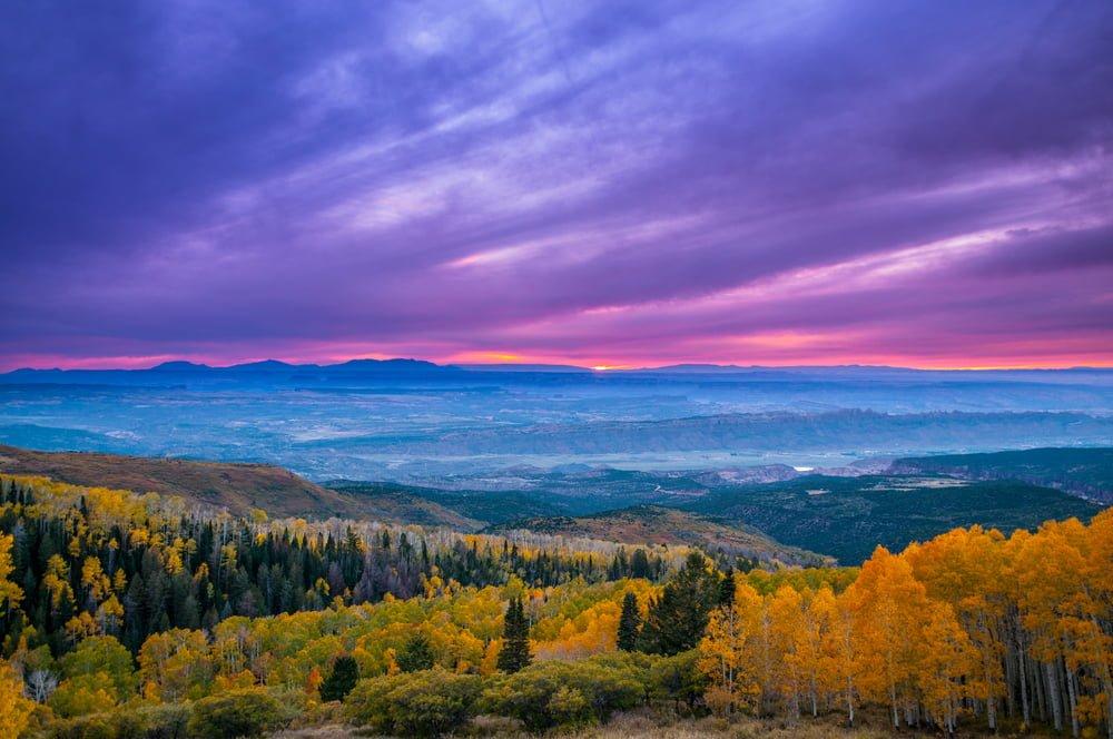 Utah Tree Shapes