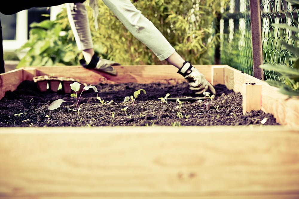 Organic Urban Gardening
