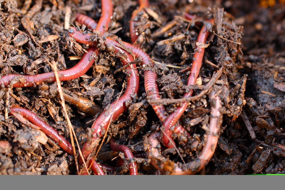 Composting Worm Bins