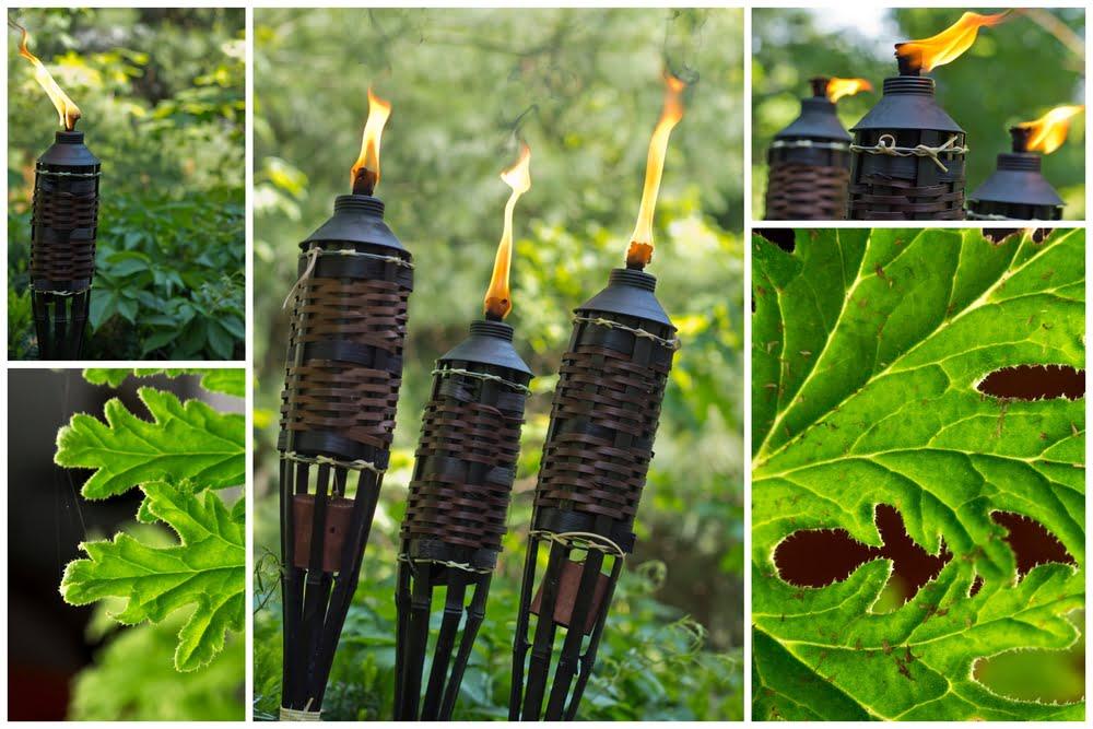 Bug Repellent Outdoor Plants
