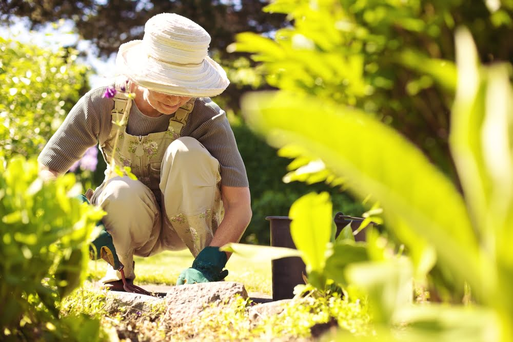 Gardening Tips From The Pros