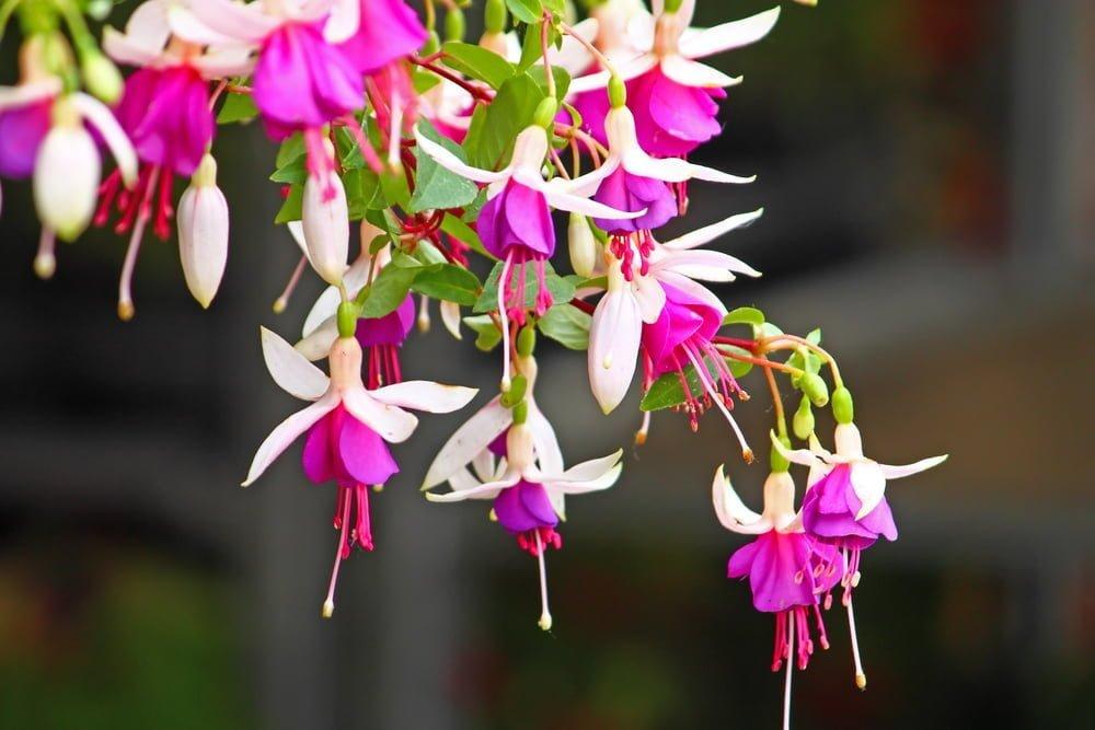 Perennial Flower Tips