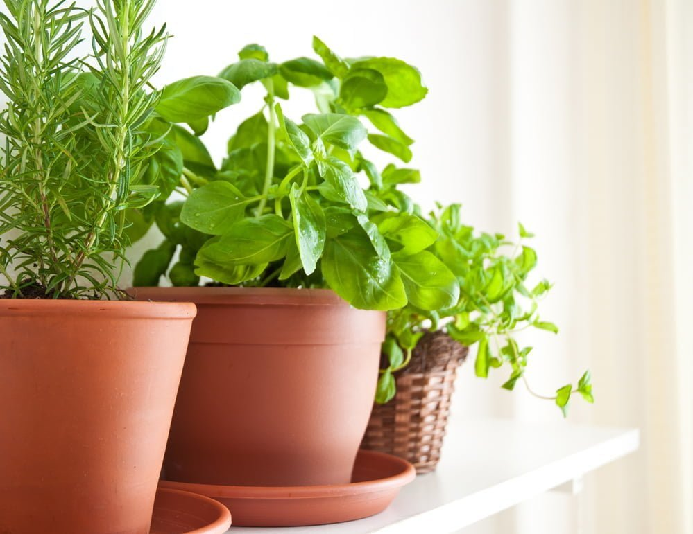 Herb Garden Pots and Containers