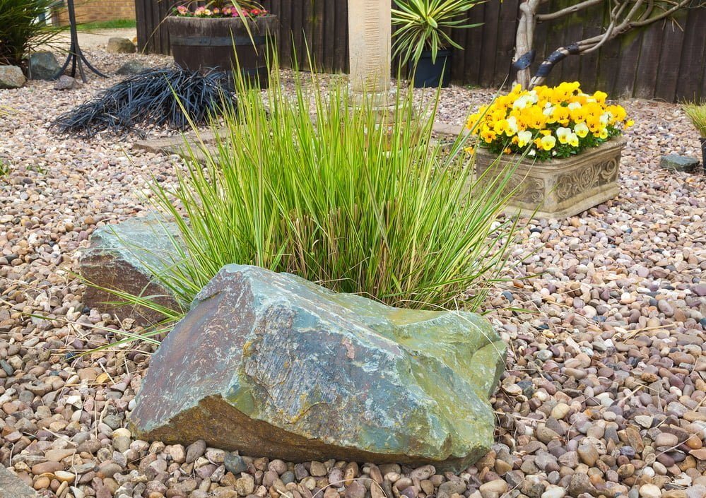 Green Up Your Lawn With Ornamental Grasses Millcreek Gardens