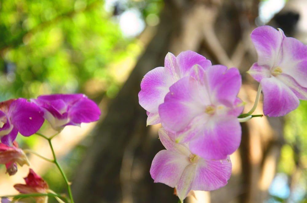 Divide Perennial Flowers