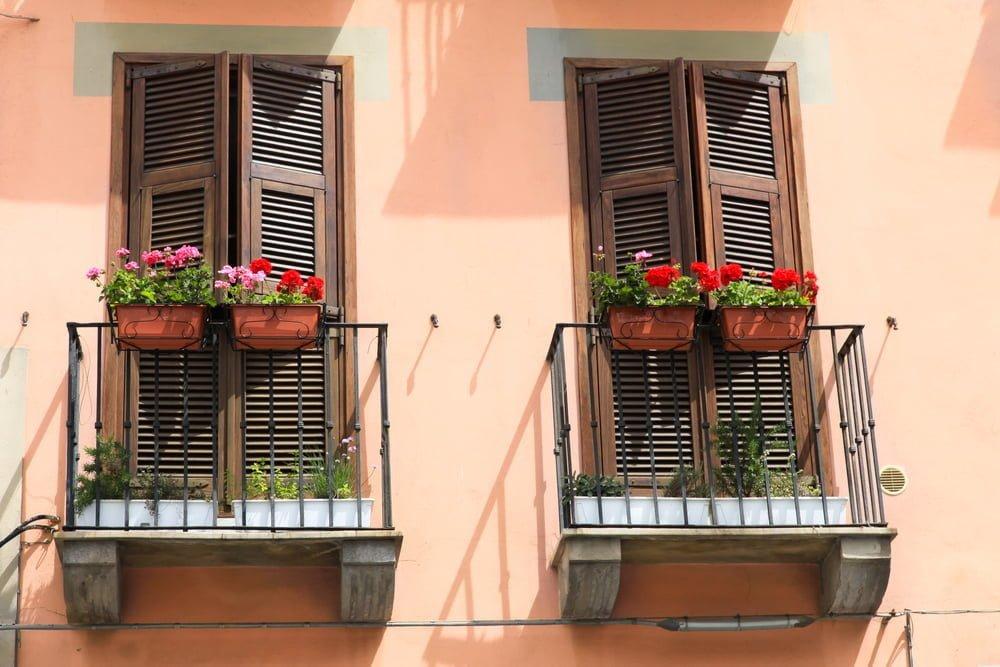 Flowering Window Garden