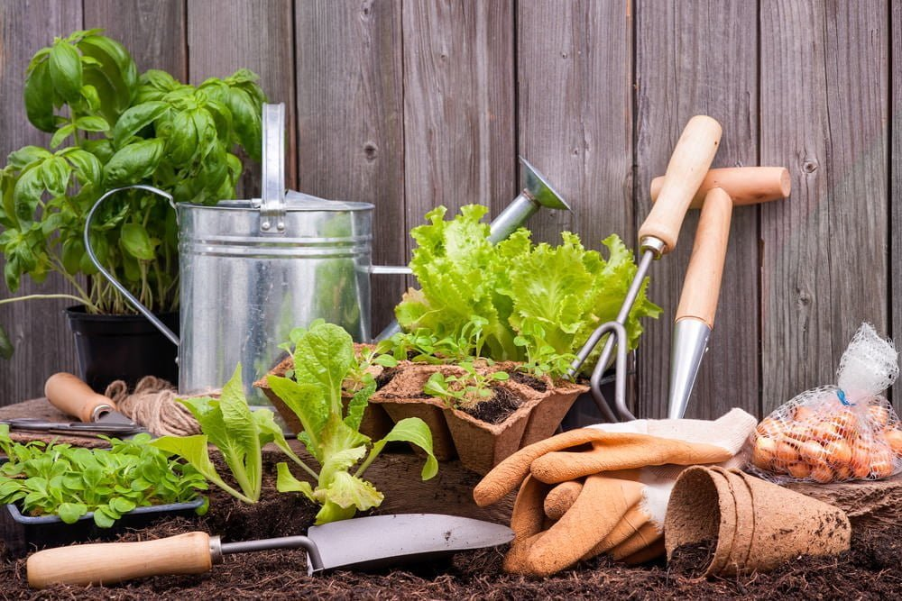 Purchase The Basic Gardening Tools For Your Garden Battle Ground Blog