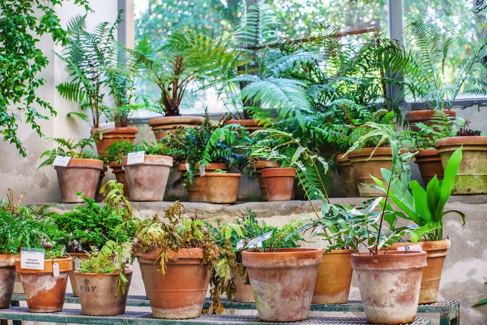 indoor plants Millcreek