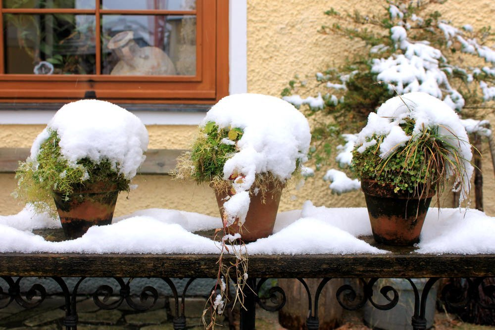 outdoor-plants