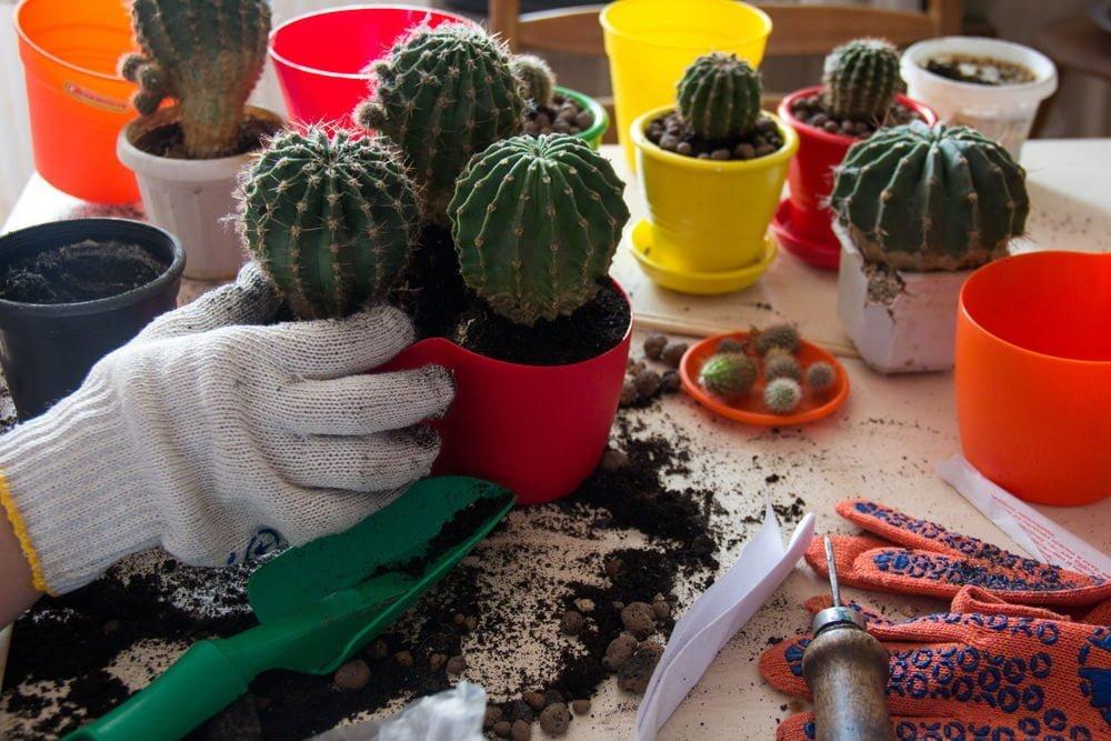cactus planting Utah