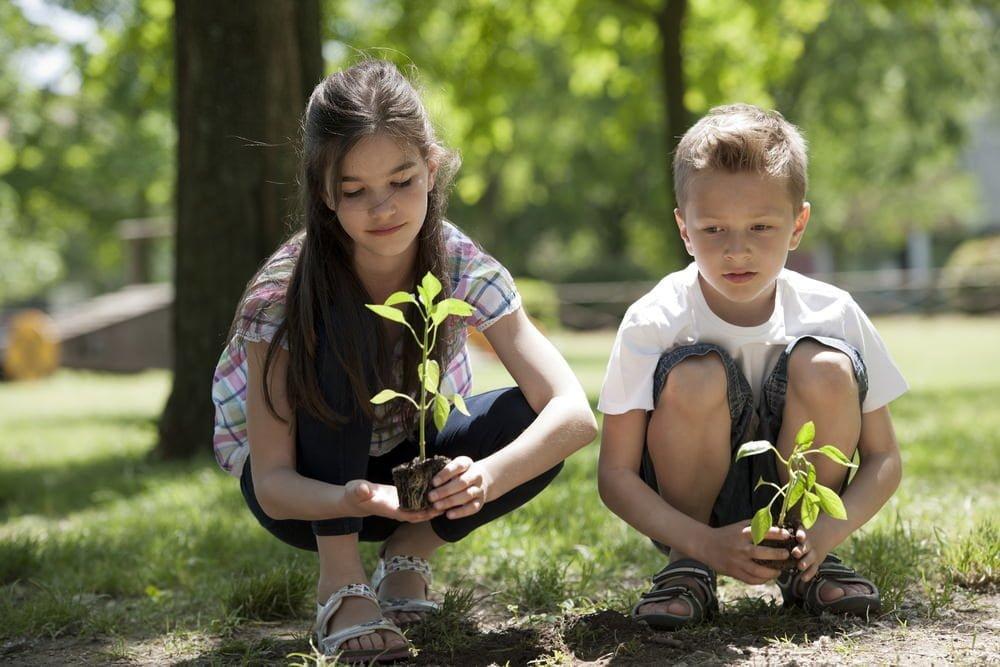 planting under trees