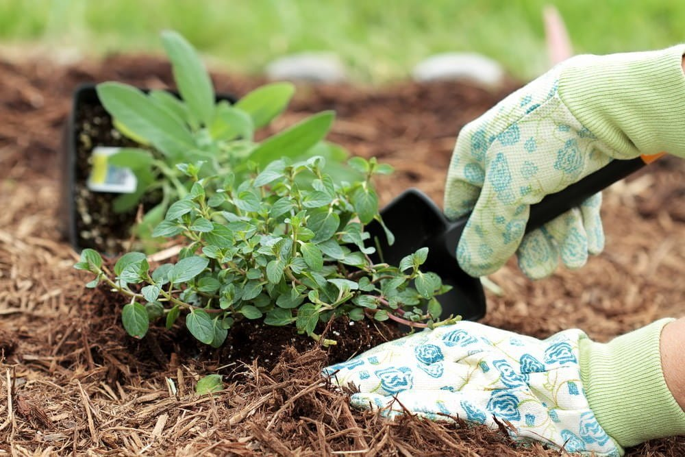 4 Musts For Using Garden Mulch In Utah Millcreek Gardens