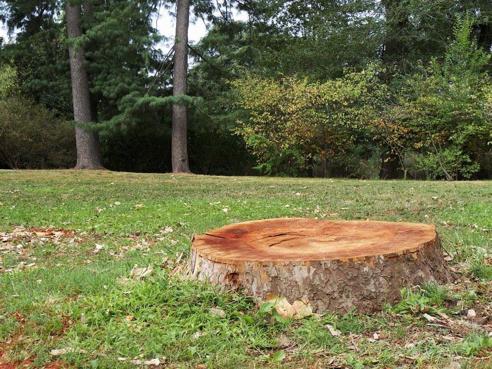 Gardening Tips 9 Tricks For Tree Stumps Millcreek Gardens
