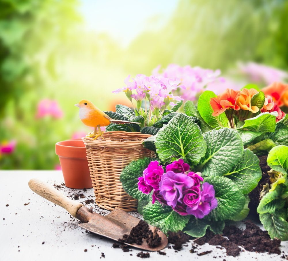 Transplant Your Outdoor Plants