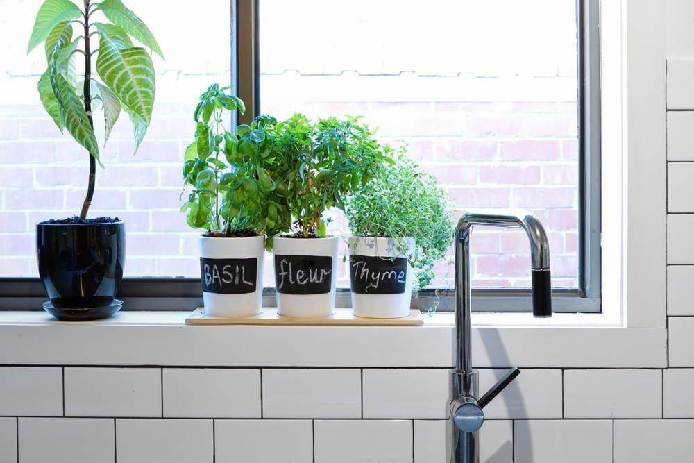 Fall Gardening Ideas: Grow an Indoor Windowsill Garden
