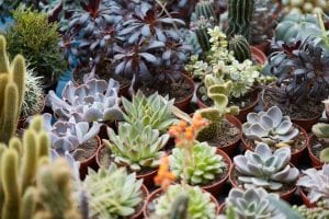 Propagating Succulents in Your Utah Landscape