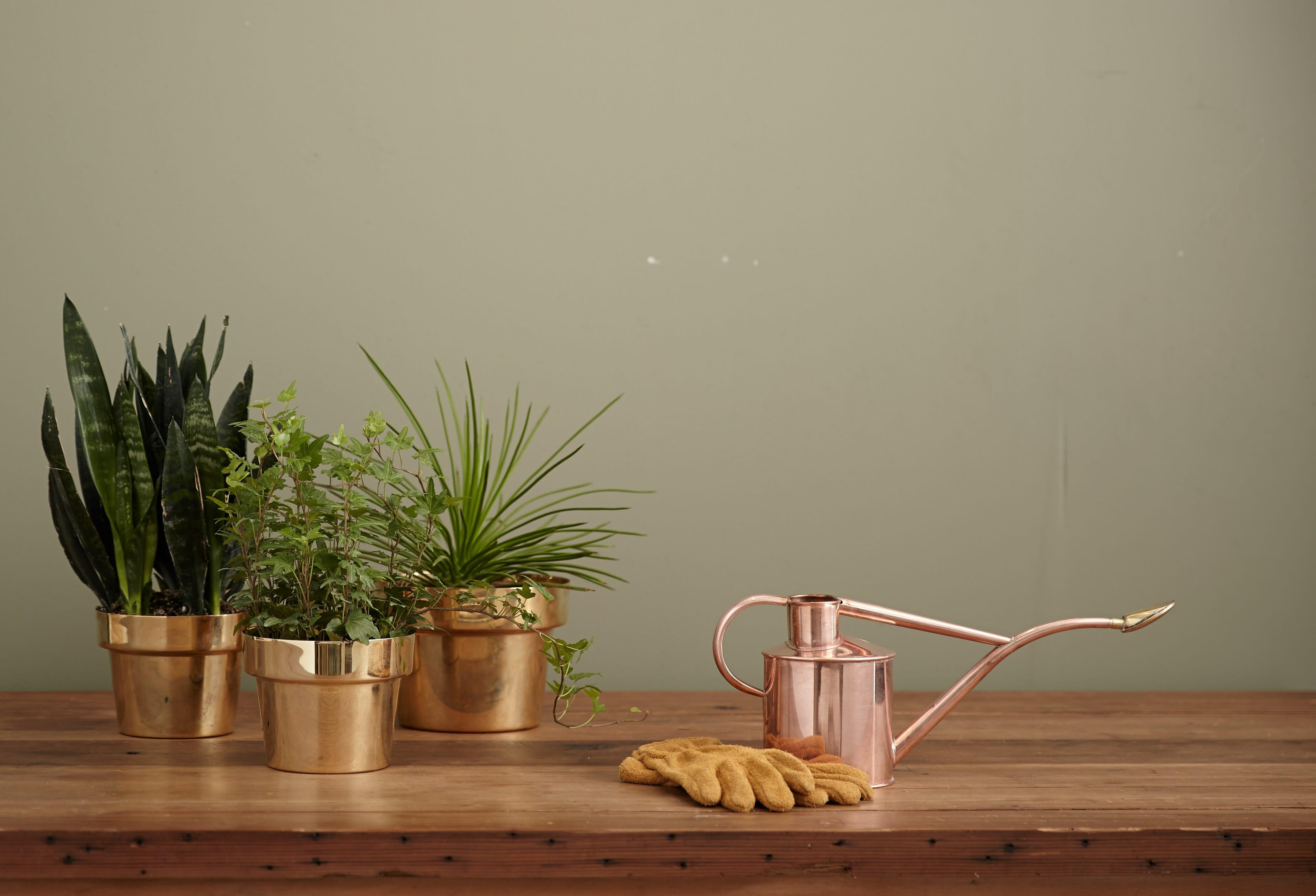 Keep Houseplants Healthy in Winter