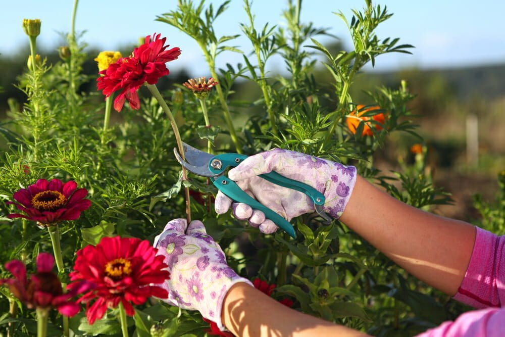 Annual Flower Myths to Overcome