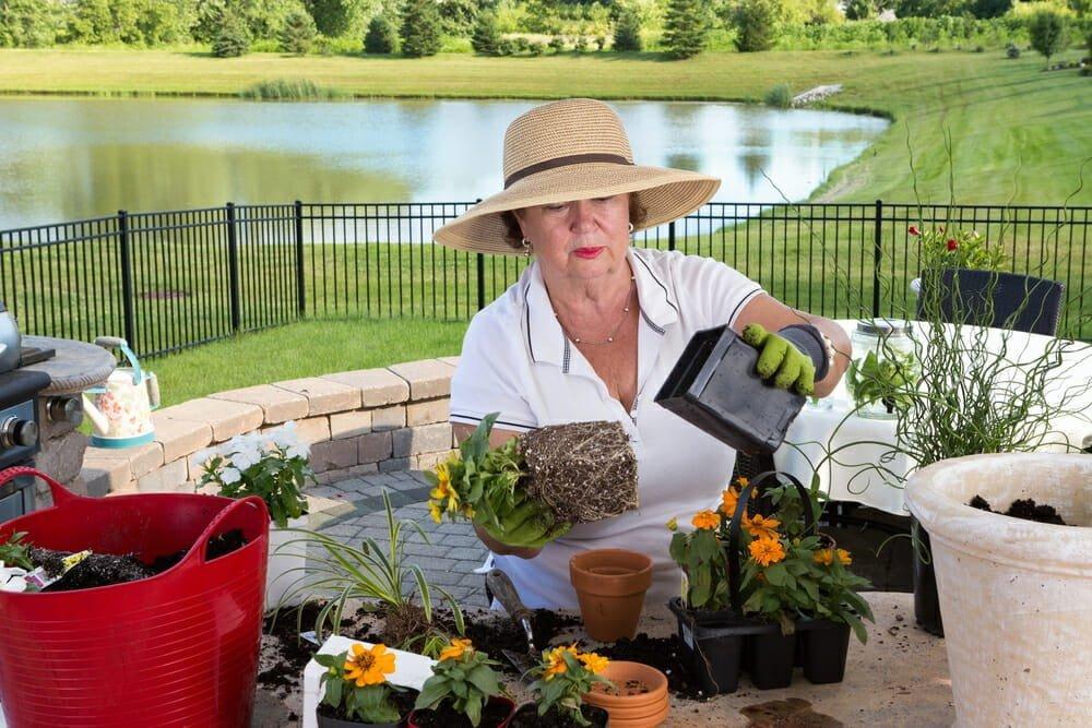 February gardening tasks