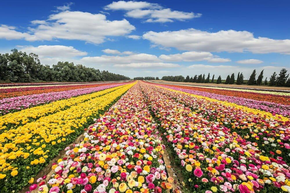 spring-blooming perennial flowers