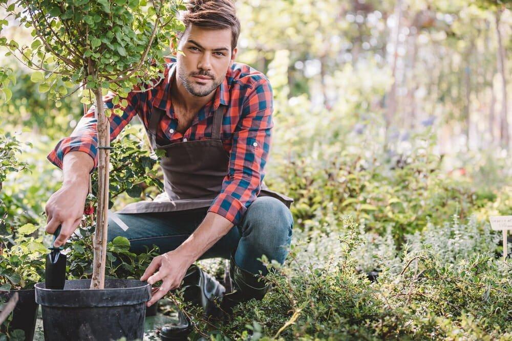 Plant Evergreen Landscaping Treesto Celebrate Arbor Day