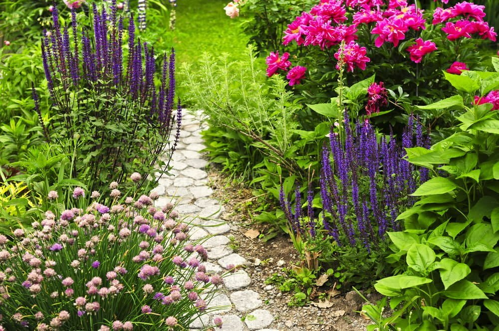 Annual Flowers: 4 Tips to Grow a Gorgeous Garden