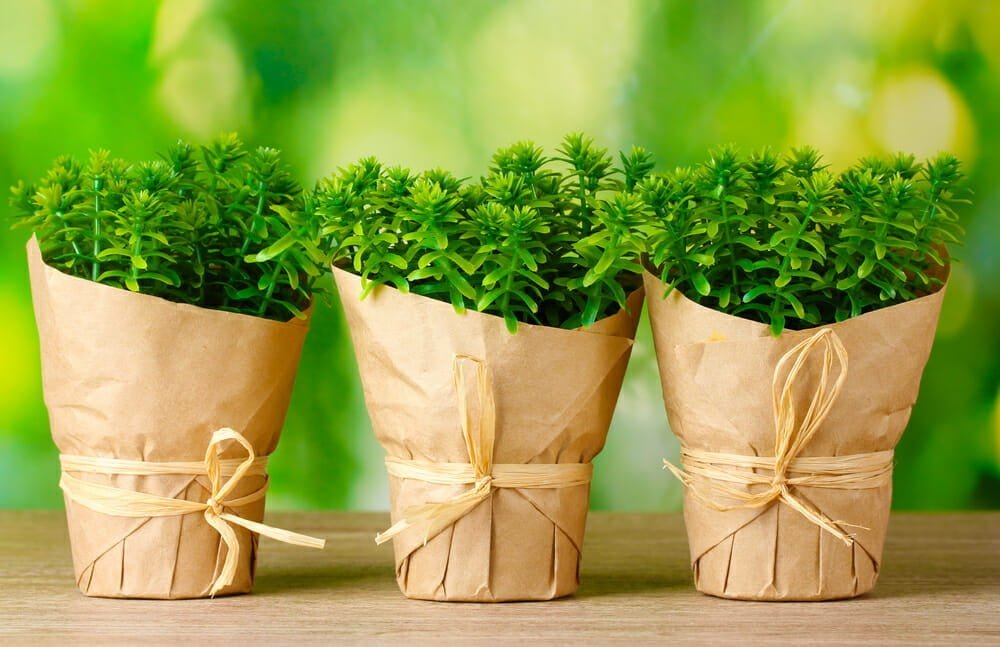 How to Choose Healthy Plantsat theNursery or Greenhouse