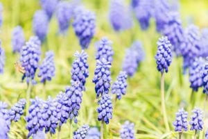 Perennial Flowers& Environmental Problems