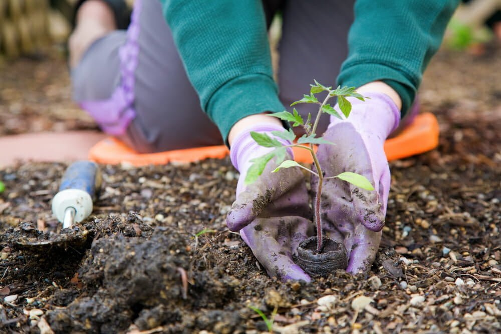 Seeds vs  Plant Nursery Seedlings: Which is Best for a New