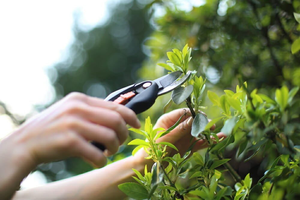 Plant Nursery pruning tools