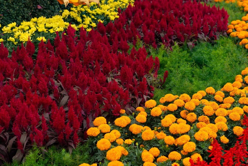 Annual Flowers Perennial Flowers Whats The Difference