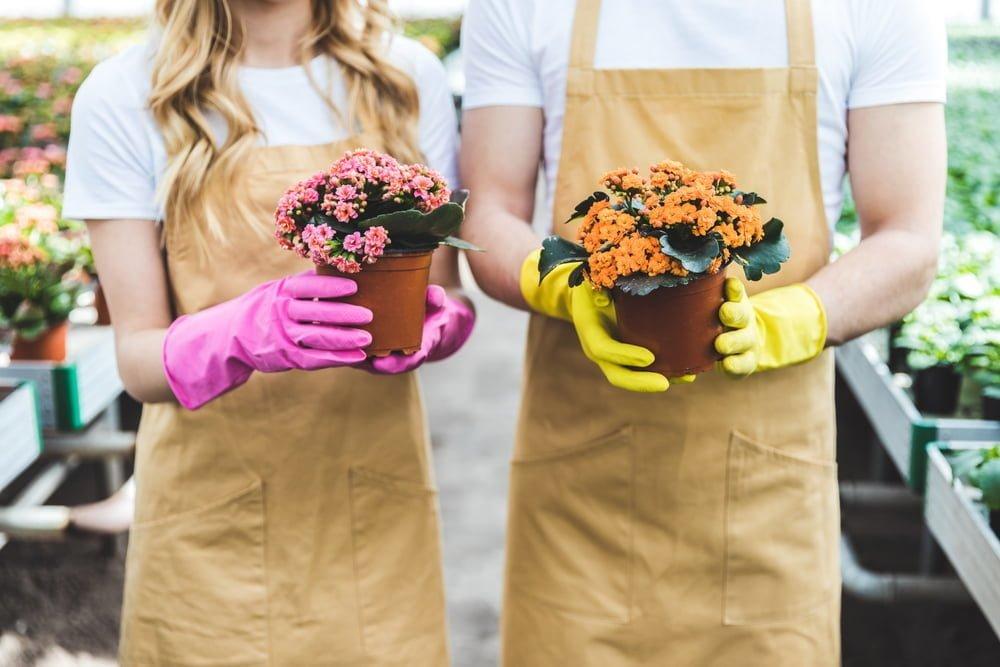Our Utah Plant Nursery Picks For