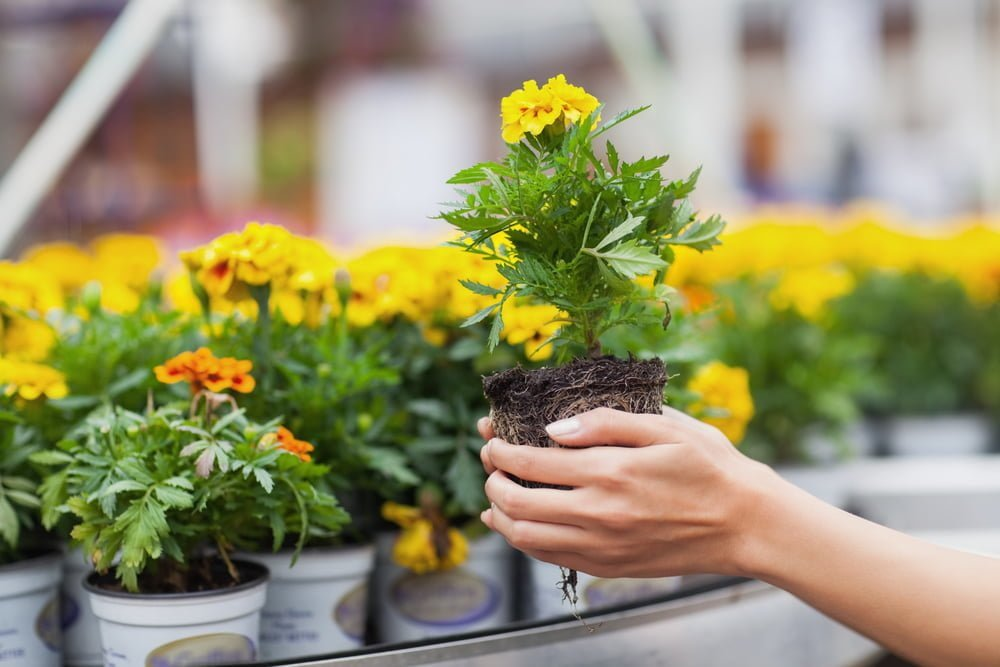 Benefits of shopping at your local garden center