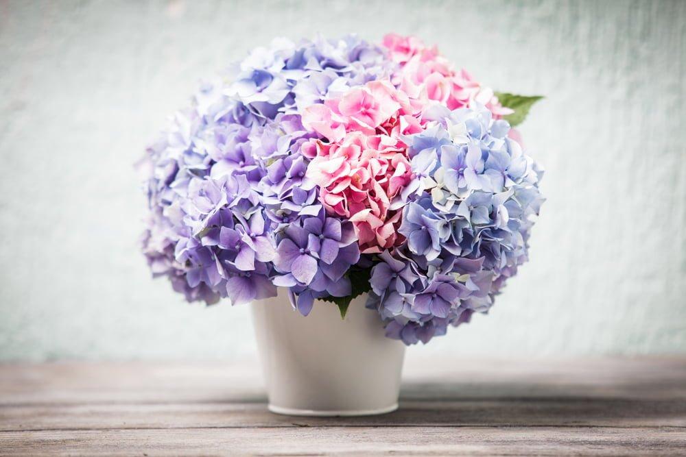 Hydrangea bouquet in vase