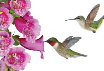 small decorative metal basket birds and flowers china.htm resources millcreek gardens  resources millcreek gardens