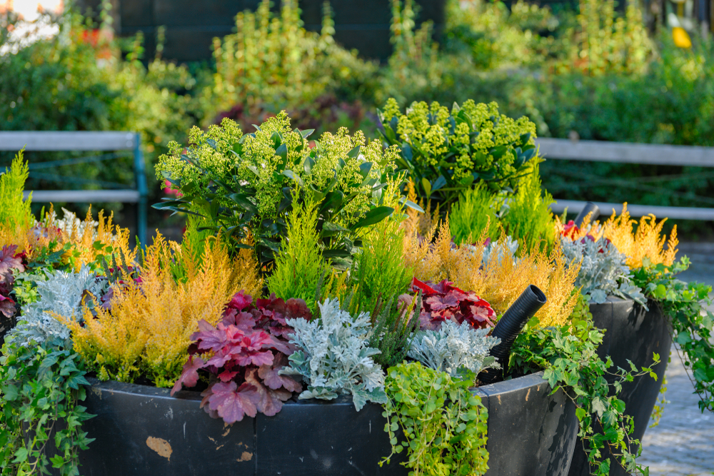 outdoor plants for fall